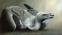 1122-griffon-vulture