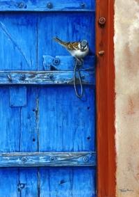1143-sparrow-rajasthan-door