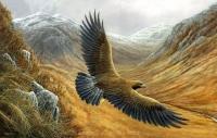 1148-golden-eagle