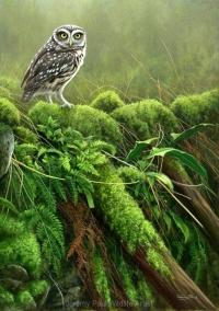 1153-tumbledown-little-owl