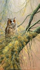 1155-long-eared-owl