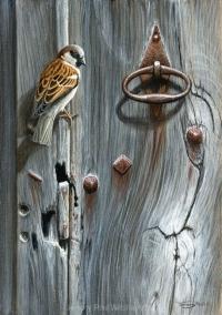 1163-Weathered door - house-sparrow