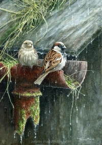 1164-its-still-raining-sparrows