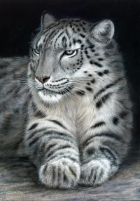 1166-snow-leopard