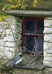 1168 Simon's-cottage-pied-wagtail