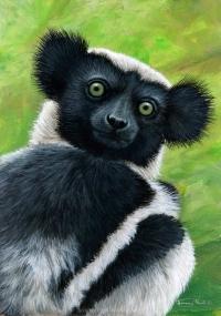 1181-Indri-quizzical