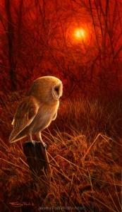 1187-barn-owl-sundown