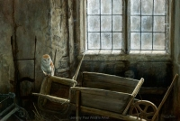 1190-the-gardeners-store-barn-owl-22x15