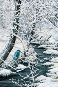 1191-winter-blues-kingfisher-22x15