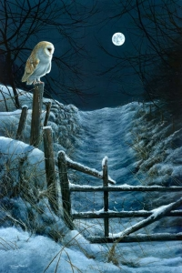 1196-moonlight-barn-owl