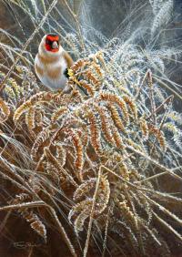 1200a-golden-frost