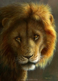 1208-Gold - Masai Mara lion-16x12