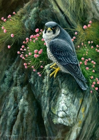 1209-peregrine-and-thrift