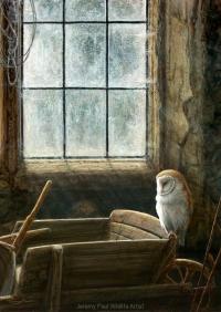 1214 the-gardeners-store-barn-owl