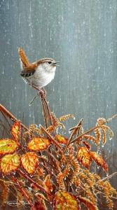 1221-singing-in-the-rain---wren