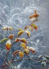 1223-falling-snow---wren