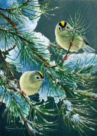 1227-goldcrests