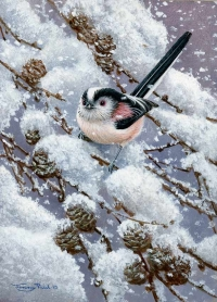 1229-falling-snow---long-tailed-tit