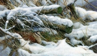 1232-winter-woodcock