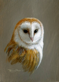 1235-barn-owl-pc