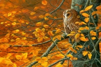 1240b-Autumn-Gold-tawny-owl