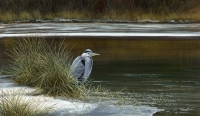 1249-Cold-feet---Heron