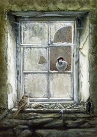 1253-Moving-in---house-sparrows