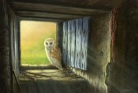 1254-let-the-sunshine-in-barn-owl