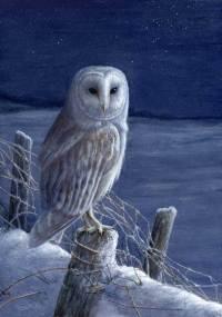 1255-Starlight-barn-owl