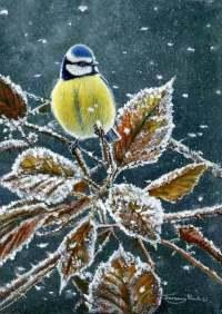 1257-Cold-morning-Blue-tit