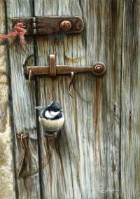 1258-At-the-door-coal-tit