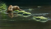 1259-Quiet-waters-otter
