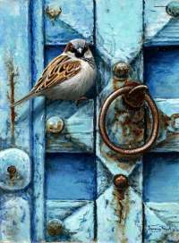 1274-House-sparrow-blue-door