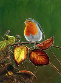 1275-Autumn-robin