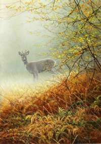 1278-morning-mist-Roebuck