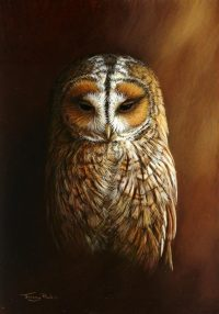 1281-Tawny-owl