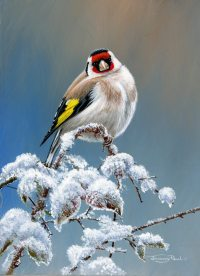 1295-Cold-finch-goldfinch