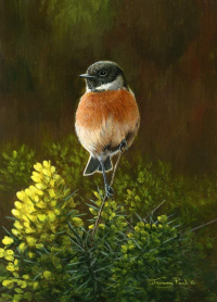 1319-Stonechat-and-gorse