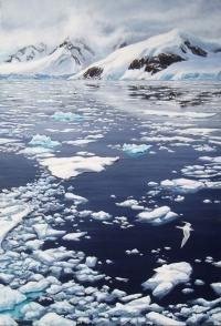 515-antarctic-tern