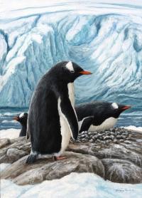 542-gentoo-penguins