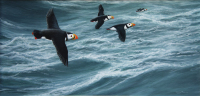 1158a-Heading-home-puffins
