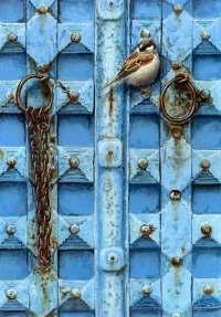 1301-Blue-door-2-house-sparrow