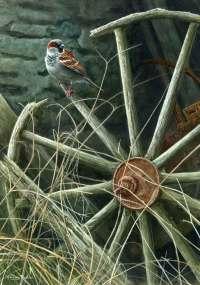 1310-wheel-house-sparrow