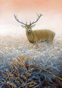 1364-Winter-morning-stag