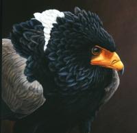 407 Bataluer eagle