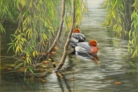 738-willow-and-widgeon