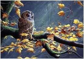jpc05 tawny owl card med