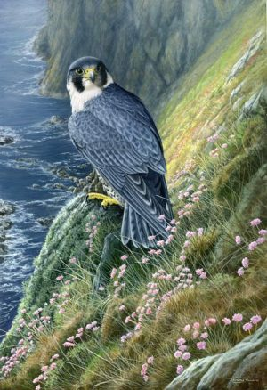 1029 Peregrine at Spanish Head 22x15