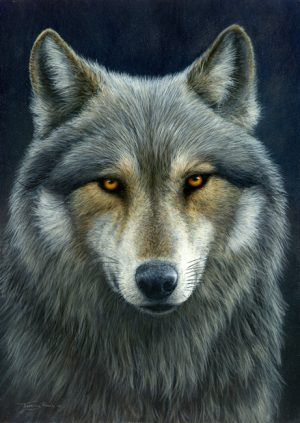 1035 Look into my eyes wolf