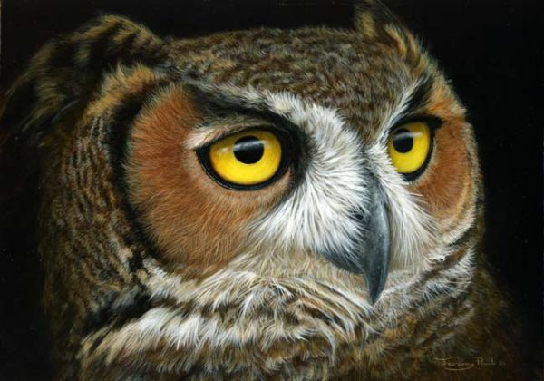 1091 Great Horned owl 12x9